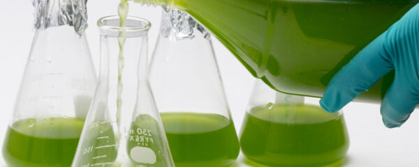 micro algues